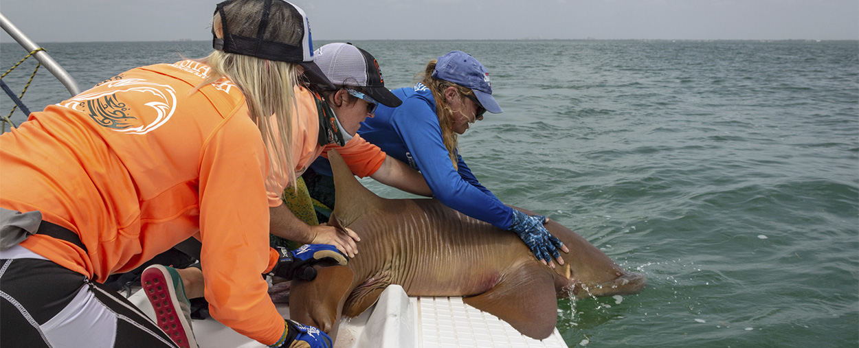Shark Research Conservation (SRC) Program