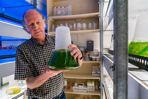 Larry Brand holds a beaker containing a water sample of cyanobacteria (blue-green algae) collected from Lake Okeechobee
