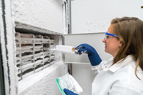 Kaycie Lanpher, a graduate assistant in Cassandra Gaston and Kimberly Popendorf's laboratory, retrieves aerosol filter samples stored in a minus-80 degree Celsius freezer